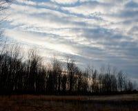 Cielo e treeline di inverno immagini stock libere da diritti