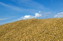 Cielo ecológico de la cosecha de maíz del grano del trigo de la pila Fotos de archivo