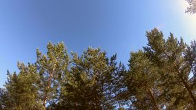 Cielo ed alberi archivi video