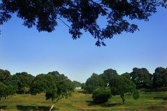 Cielo ed alberi Fotografia Stock