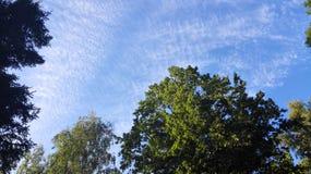 Cielo ed alberi immagine stock