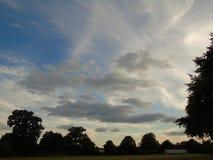 Cielo ed alberi di luccichio in parco di Hertfordshire Fotografie Stock Libere da Diritti
