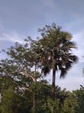 Cielo ed albero Fotografia Stock Libera da Diritti
