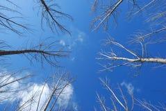 Cielo ed albero Immagini Stock