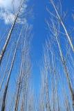 Cielo ed albero Fotografia Stock