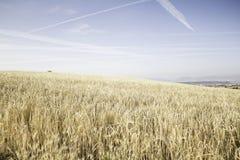 Cielo en campo de trigo Foto de archivo libre de regalías