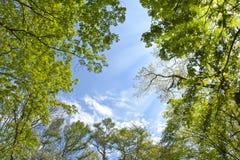 Cielo en el bosque Imagen de archivo libre de regalías