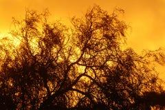 Cielo en el fuego. Imagen de archivo libre de regalías