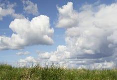 Cielo en fondo de la hierba verde Fotografía de archivo