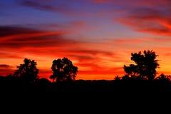 Cielo en hermoso colorido de la nube de la puesta del sol con el árbol del movimiento de la silueta en arbolado y tarde en la nat Imagen de archivo libre de regalías