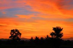 Cielo en hermoso colorido de la puesta del sol y de la nube con el árbol de la silueta en arbolado Fotografía de archivo