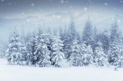 Cielo estrellado en noche nevosa del invierno Vía láctea fantástica en el ` s Eve del Año Nuevo Noche nevosa del invierno del cie Imágenes de archivo libres de regalías