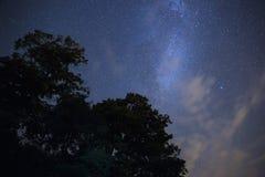 Cielo estrellado sobre el bosque Fotos de archivo libres de regalías