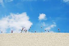 Cielo, fiore e parete Fotografia Stock