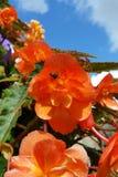 Cielo, flores y abeja Foto de archivo