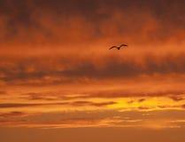 Cielo in fuoco ed un uccello Fotografie Stock Libere da Diritti
