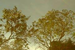 Cielo hermoso con los árboles Foto de archivo