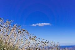 Cielo, hierba, y nube sola, fondo hermoso Imagen de archivo libre de regalías