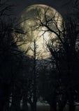 Cielo iluminado por la luna con los árboles fantasmagóricos Fotografía de archivo libre de regalías