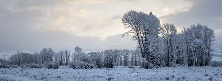 Cielo innevato di mattina e di treeline immagini stock libere da diritti