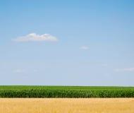 Cielo, maíz y trigo Imagen de archivo libre de regalías