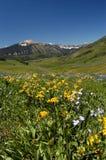 Cielo, montagna, prato e fiori Fotografia Stock