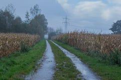 Cielo nero del campo di mais e giorno piovoso Immagine Stock