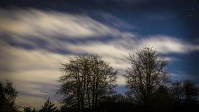 Cielo nocturno azul con las estrellas y el árbol Imagenes de archivo
