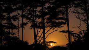 Cielo nocturno colorido de los fuegos artificiales del día de fiesta Imagen de archivo libre de regalías