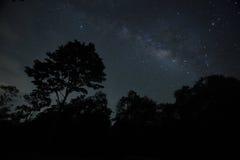 Cielo nocturno con la vía láctea sobre el bosque y los árboles imagen de archivo