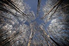Cielo nocturno con las estrellas en la noche del invierno con los árboles vendimia Imágenes de archivo libres de regalías