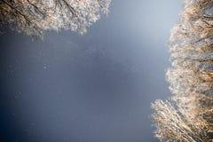 Cielo nocturno con las estrellas en la noche del invierno con los árboles vendimia Fotografía de archivo libre de regalías