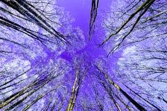 Cielo nocturno con las estrellas en la noche del invierno con los árboles Foto de archivo