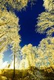 Cielo nocturno con las estrellas en la noche del invierno con los árboles Imágenes de archivo libres de regalías