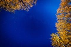 Cielo nocturno con las estrellas en la noche del invierno con los árboles Fotos de archivo libres de regalías