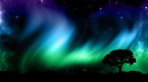 Cielo nocturno con las luces del norther con las siluetas del árbol Imagen de archivo