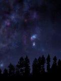 Cielo nocturno estrellado sobre el bosque Foto de archivo