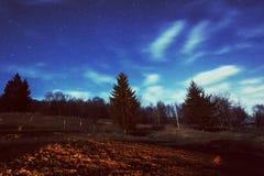 Cielo nocturno estrellado y paisaje del bosque Imagen de archivo