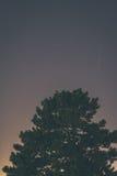 Cielo nocturno sobre árbol Fotos de archivo libres de regalías
