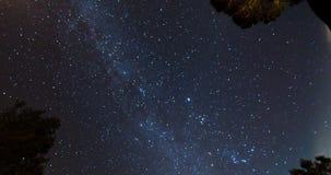 Cielo nocturno sobre copas almacen de video