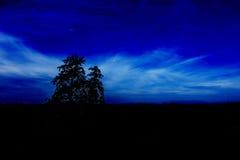 Cielo nocturno y árbol imagenes de archivo