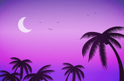 Cielo nocturno y palmeras de la puesta del sol Foto de archivo libre de regalías