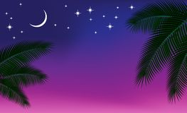 Cielo nocturno y una ramificación de la palma. Foto de archivo