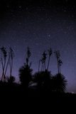 Cielo notturno del deserto Fotografia Stock Libera da Diritti