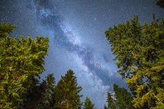Cielo notturno della Via Lattea della siluetta dei pini Fotografia Stock