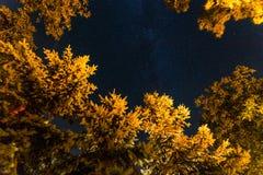 Cielo notturno di estate con le stelle e la Via Lattea fotografie stock