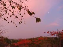 Cielo notturno di Sunda di tramonto di estate fotografia stock libera da diritti