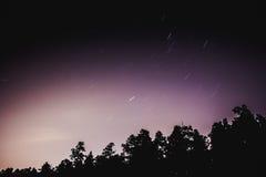 Cielo notturno e la foresta Fotografie Stock Libere da Diritti