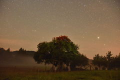 Cielo notturno nel mio cortile Fotografia Stock Libera da Diritti