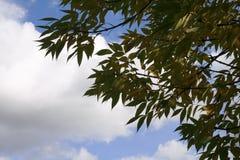 Cielo, nubes, árbol Fotos de archivo